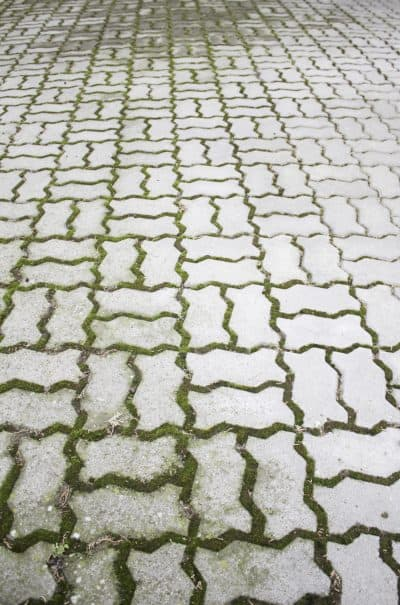can you use bleach in a pressure washer moss covered path